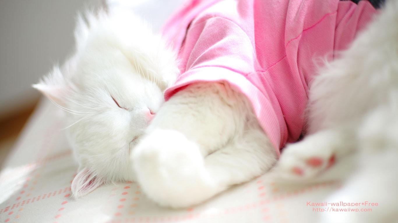 陽だまりのソファーで気持ちよく眠る白猫の壁紙