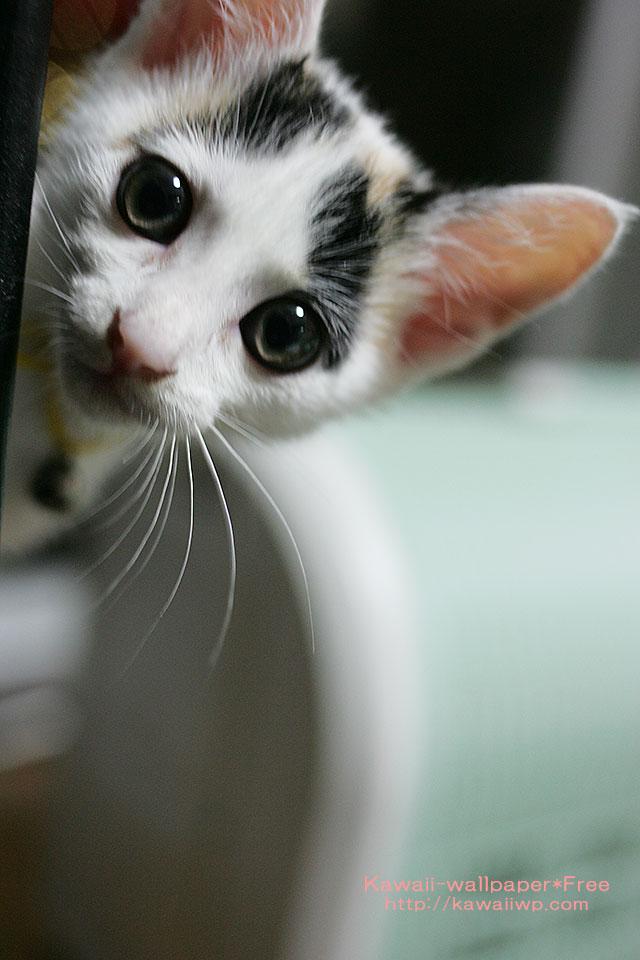 子猫のiPhone用壁紙