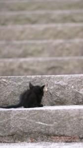 黒猫の子猫のiPhone用壁紙画像2