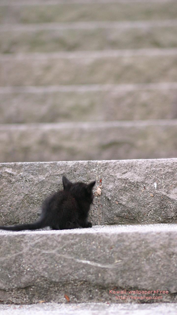 黒猫の子猫のiphone用壁紙