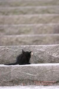 黒猫の子猫のiPhone用壁紙画像1
