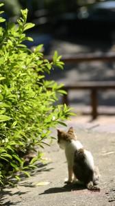猫背の子猫のiPhone用壁紙画像2