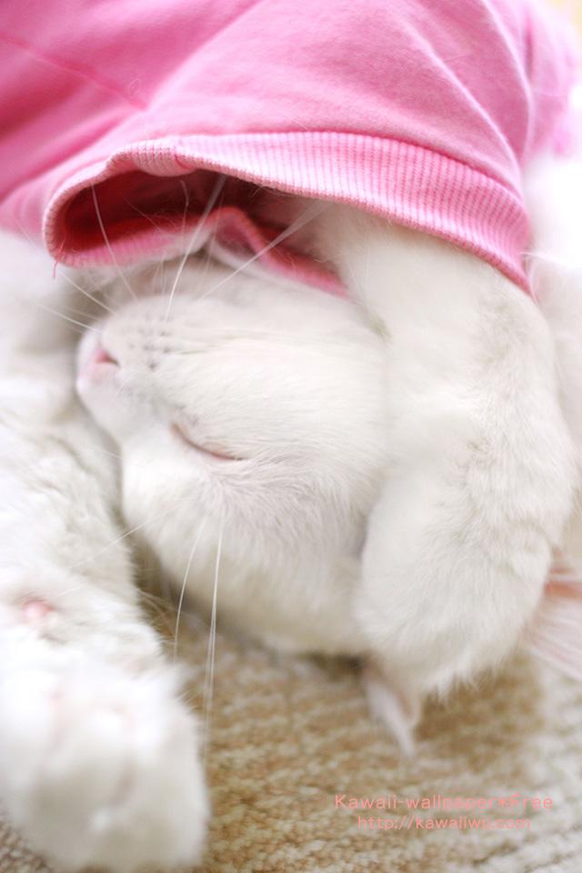 かわいい寝姿の白猫のiPhone用壁紙