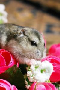 造花をかじるハムスターのiPhone用壁紙画像1