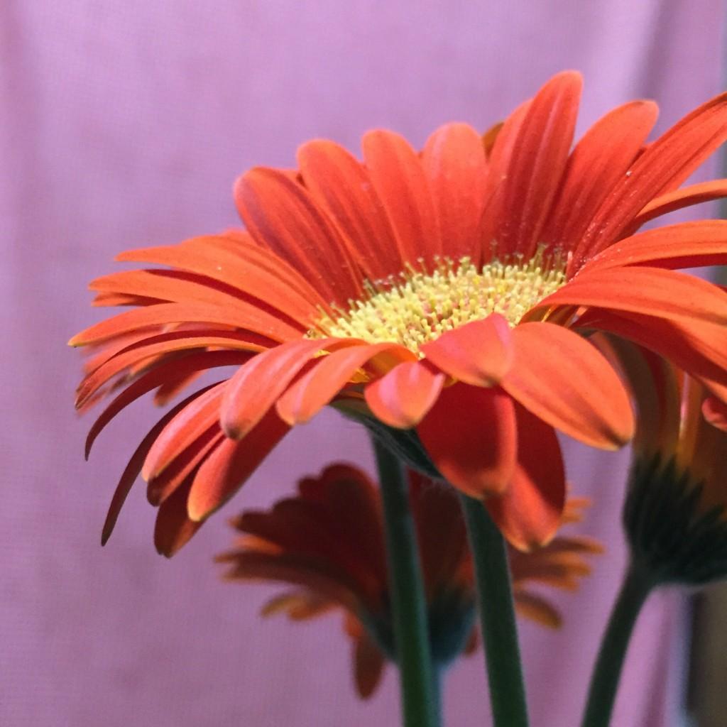 お花を買ってきました❗